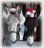 Donkey_christmas_2